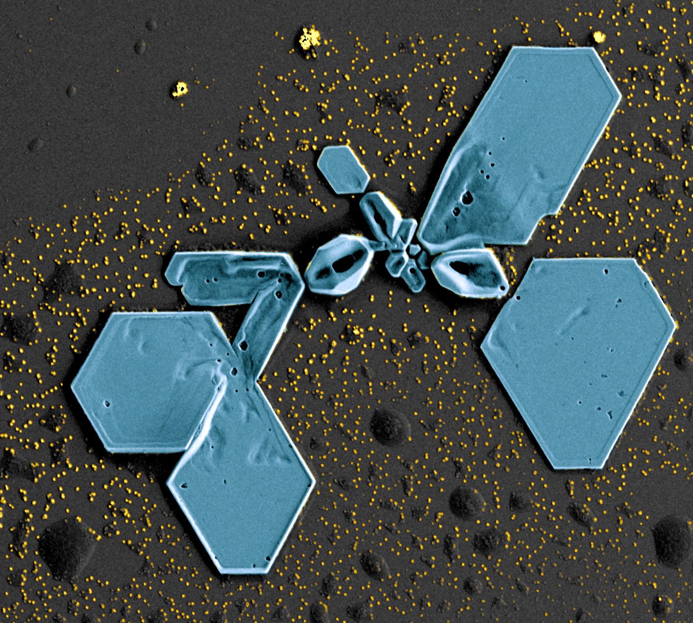 Nanoparticules d'or observées au microscope électronique à balayage